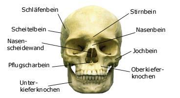 Kleinster Menschlicher Knochen