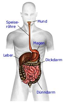 Berühmt Anatomie des Menschen ❤: Skelett, Muskulatur, Sinnesorgane &BS_53